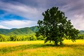 picture of cade  - Tree in a field at Cade - JPG