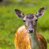 pic of deer rack  - Close - JPG