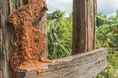 Orange Termite Nest