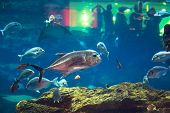 DUBAI, UAE - 1 APRIL 2014: Huge Oceanarium inside Dubai Mall. It is the largest indoor aquarium in t