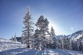 Постер, плакат: Trees On Ski Slopes With Sun