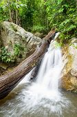 Small Waterfall In Rainforest