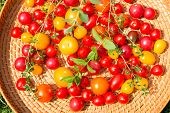 picture of picking tray  - Assorted colorful tomatoes and herbs from the garden - JPG