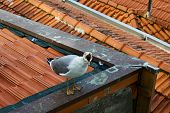 One White Seagull Is Sitting On A Roof