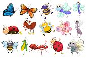 image of insect  - Illustration of a set of different kinds of insects - JPG