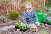 Little Boy Gardening And Planting Flowers In Garden