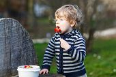 picture of strawberry blonde  - Lovely blond boy of two years eating strawberries outdoors - JPG