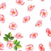 stock photo of wild-brier  - Beautiful watercolor seamless pattern with tender pink brier flowers and leaves on the white background - JPG