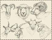 set of animals, sheep, goats. Symbol year