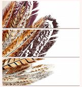 Fashion Business Cards Set With Feathers