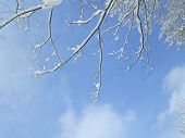 Tree Branch With Snow And Sky