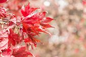 foto of seoraksan  - Dry maple and bokeh at right side in autumn at Seoraksan National Park  - JPG