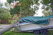 stock photo of tarp  - Fallen tree on a motor boat in the fall - JPG