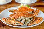 foto of cooked crab  - Stream Crabs on colorful dish  - JPG