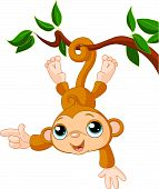 picture of baby-monkey  - Cute baby monkey on a tree showing  - JPG