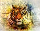 picture of mystical  - painting of a bright mighty tiger head on ornamental background and mystic face collage - JPG