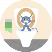picture of toilet  - The cat in the bathroom sitting in the toilet - JPG