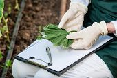 picture of genetic engineering  - Biotechnology woman engineer with a clipboard and pen examining plant leaf for disease - JPG