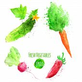 stock photo of radish  - Vector set of watercolor colorful vegetables - JPG