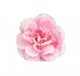 picture of carnations  - Pink carnation isolate on white with work path - JPG