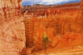 picture of hoodoo  - Hoodoos Tree Bryce Point Bryce Canyon National Park Utah - JPG