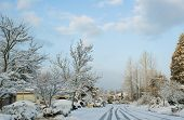 snow blankets a suburban cul-de-sac - early AM