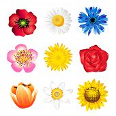 stock photo of poppy flower  - Set of vector  spring flowers isolated on white - JPG