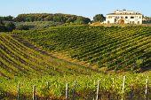 An Italian vineyard at sunset in the autumn