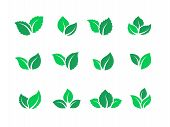Flat Leaves Set. Vegan Green Food Logos, Farm Plant Eco And Bio Energy, Simple Forest Leaf Herbal Te poster