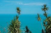 Palm Trees In Breeze With Blue Sky And White Clouds Above Sea Or Ocean And Horizon poster