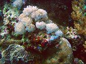 Coral Polips In Timor Sea
