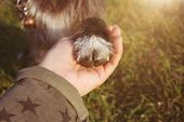 Dog Love Obedience. Close-up Puppy High Five On Green Grass. poster