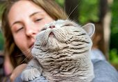 Portrait Of Purebred British Grey Cat And A Beautiful Young Girl Holding Him In Her Arms Closeup poster