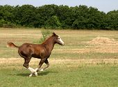 Picture of running foal.