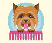 Dogs Grooming. Haircut, Combing And Grooming Pets. poster