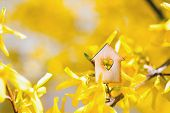 Closeup Wooden House With Hole In Form Of Heart Surrounded By Yellow Flowering Branches Of Forsythia poster