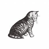 The Kitten Is Sitting. Cat Sketch Hand Drawing. Kitty Vector Illustration poster