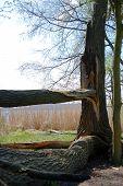 Broken Tree.