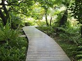 Wooden Walk Path