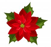 Red poinsettia. Vector illustration.