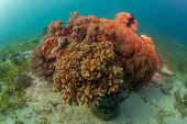 large colourful coral head