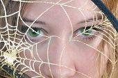 Green Eyes Look Through Spider'S Web