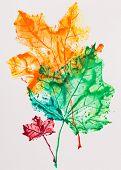 Постер, плакат: Кленовые листья отпечаток акварель живопись