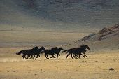 image of wild horse running  - The Running wild horses in desert mountains - JPG