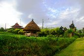Coffee Growing Village, Bali