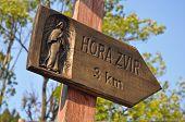 hill Zvir