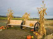 Cornstalks, Pumpkins, And Benches.