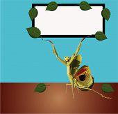 Praying Mantis Sign..