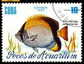 Vintage  Postage Stamp. Chaetodon Sedentarius.