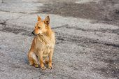 Red Dog Sitting On The Road